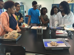 Students watch as biology students, Nakeisha Prantice and Chenae Allen, dissect sheep brains.   (photo credit - Arige Shrouf)